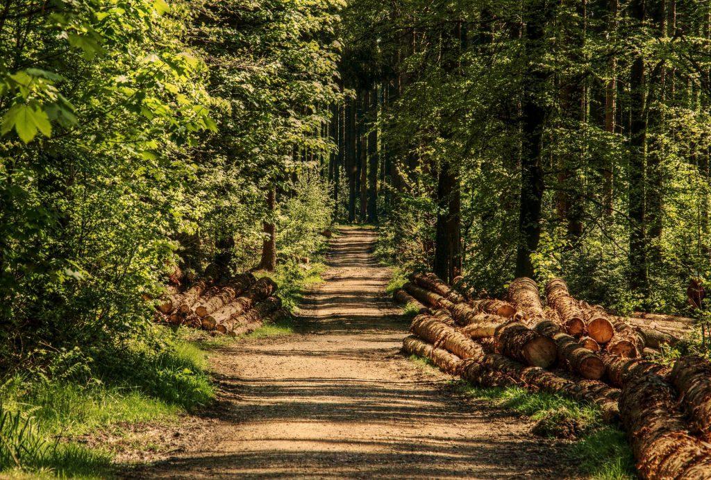 passeggiata natura